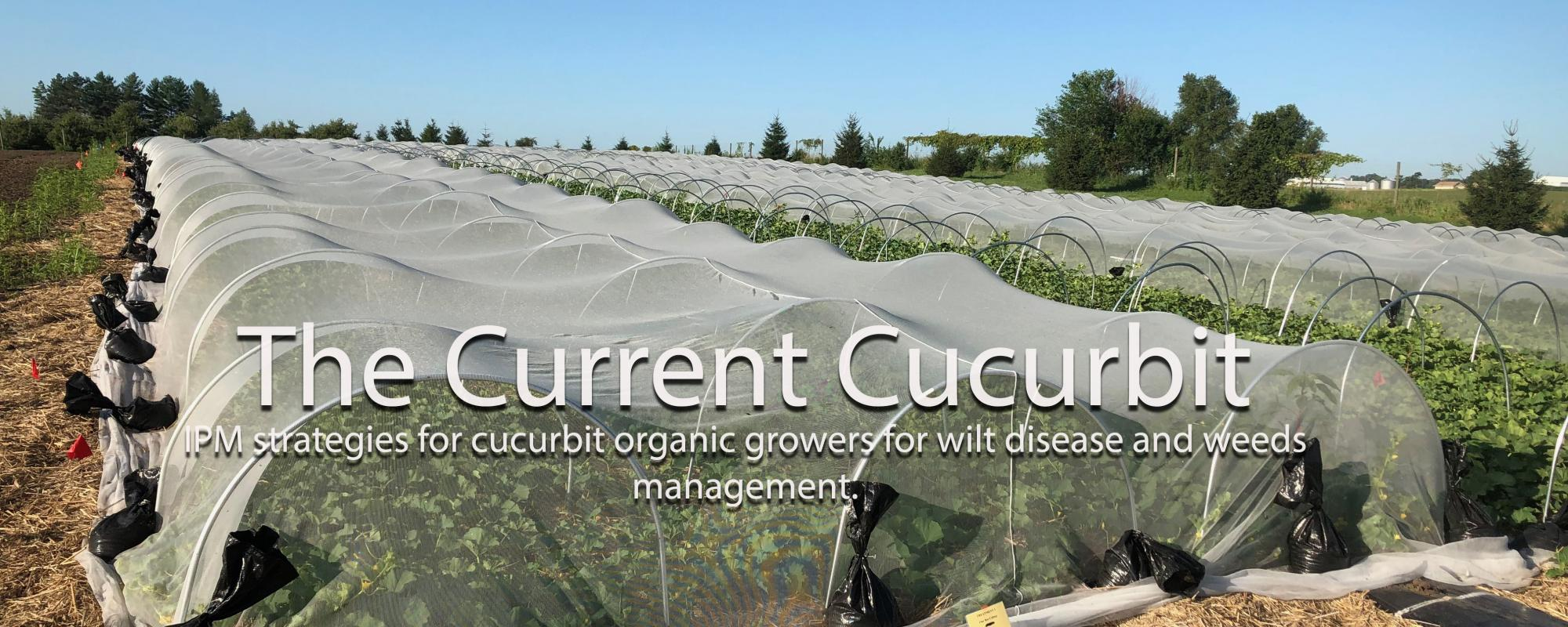 The Current Cucurbit IPM strategies for cucurbit organic growers for wilt disease and weeds management.